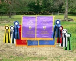 Ribbons won at Oklahoma Show