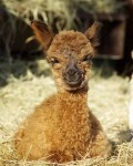 Magic cria smile