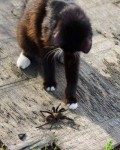 Peanut with spider