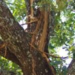 Lightning hit tree