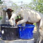 Bianca playing in water tub