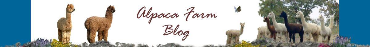 Alpaca Blog