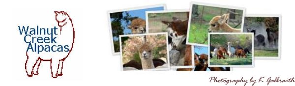 Alpaca Gallery at Walnut Creek