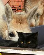 Funny alpaca with cat