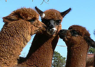 Cria kisses pic
