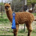 Farren blue ribbon winner!